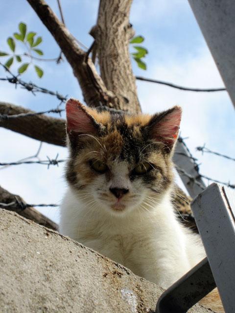熱いトタン屋根の猫2