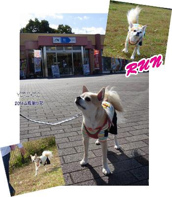 yuruiro20141031_i001