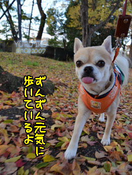 yuruiro20141214_i001