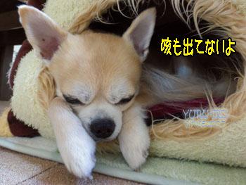 yuruiro20141214_i002