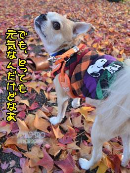 yuruiro20141214_i003