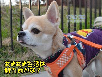 yuruiro20141214_i005