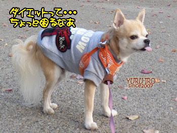 yuruiro20141214_i004
