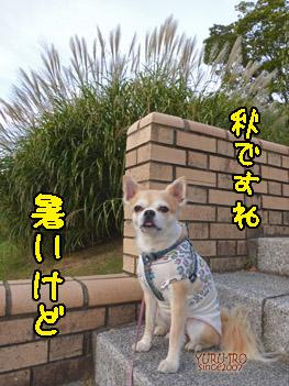 yuruiro20140922_i003
