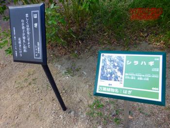 yuruiro20141004_i007