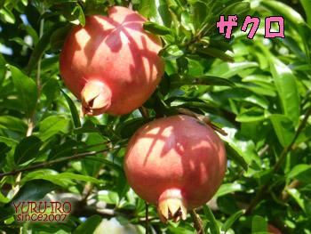 yuruiro20141004_i004
