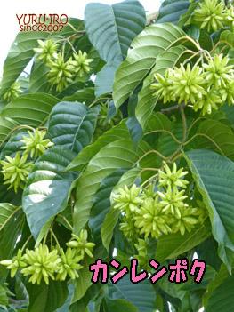 yuruiro20141004_i006