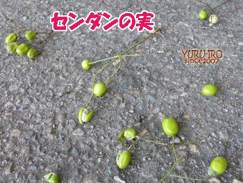 yuruiro20141006_i001