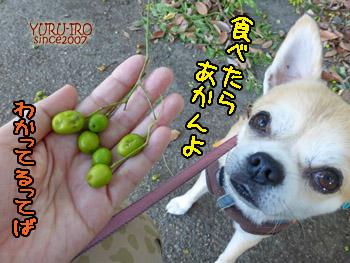 yuruiro20141006_i003
