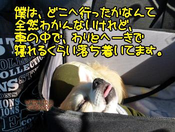 yuruiro20141027_i002