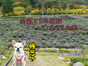 yuruiro20141031_i003
