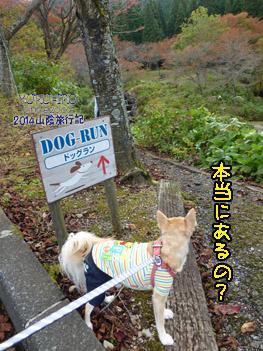 yuruiro20141031_i004