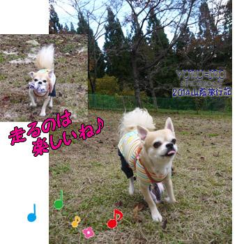 yuruiro20141031_i006