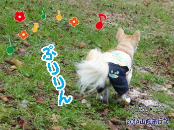 yuruiro20141031_i007