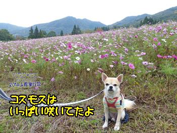 yuruiro20141101_i001