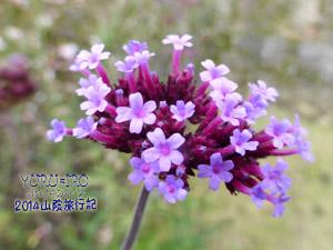 yuruiro20141101_i004