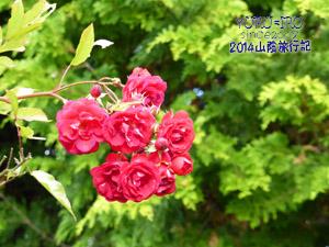 yuruiro20141101_i005