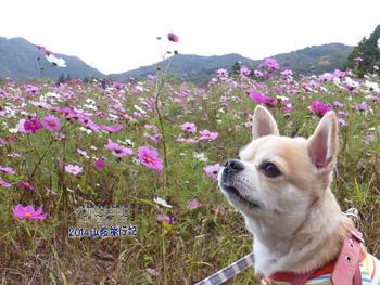 yuruiro20141101_i006