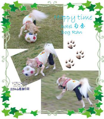 yuruiro20141108_i001
