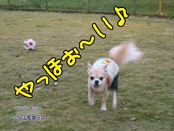 yuruiro20141108_i002