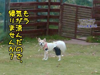 yuruiro20141108_i003