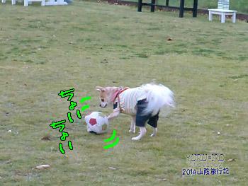 yuruiro20141108_i004