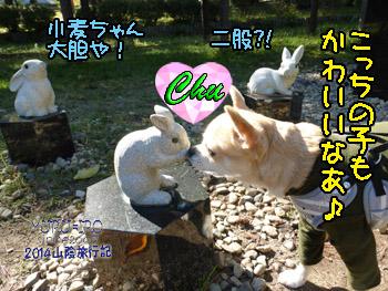 yuruiro20141114_i003