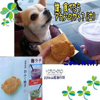yuruiro20141114_i006