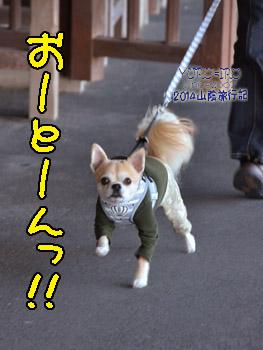 yuruiro20141114_i007