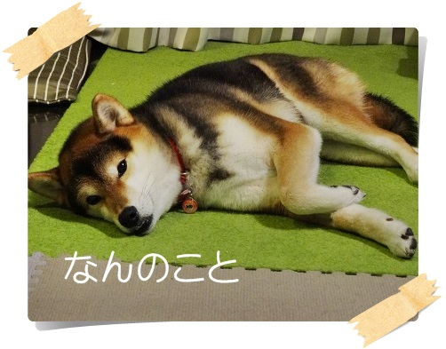 komaro20141222_3.jpg