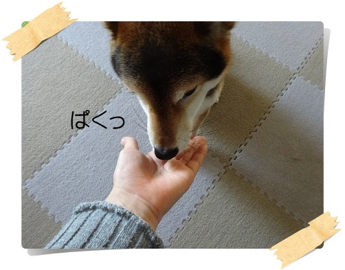 komaro20141225_3.jpg