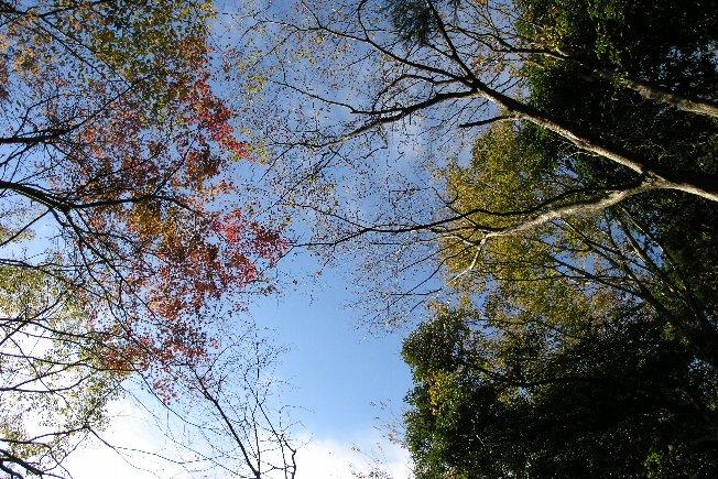 20101121_007.jpg