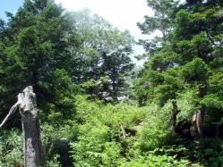 八幡平蓬莱峡33