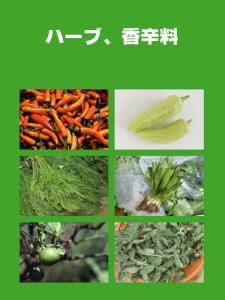 南国の野菜たち11