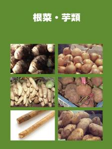 南国の野菜たち9