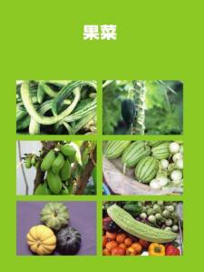 南国の野菜たち8