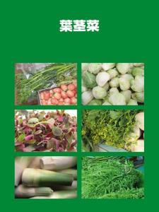 南国の野菜たち7