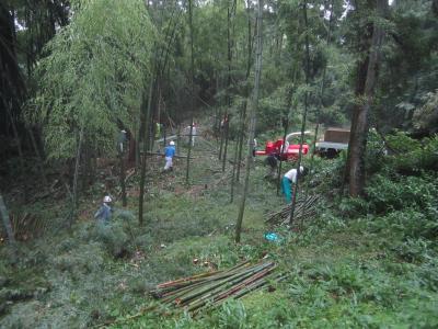 竹林整備7月