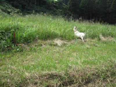 ヤギの移動9月10日