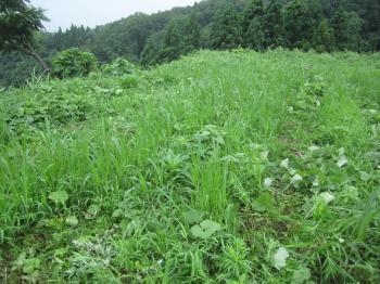 きびと草刈り