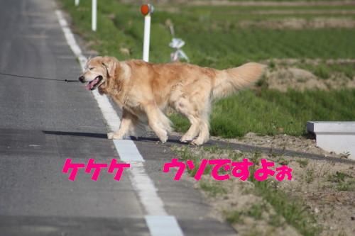 bu-50560001.jpg