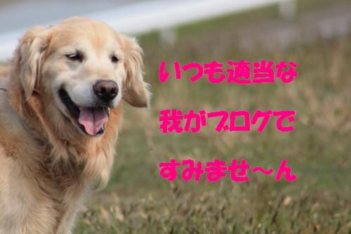 bu-50660001.jpg
