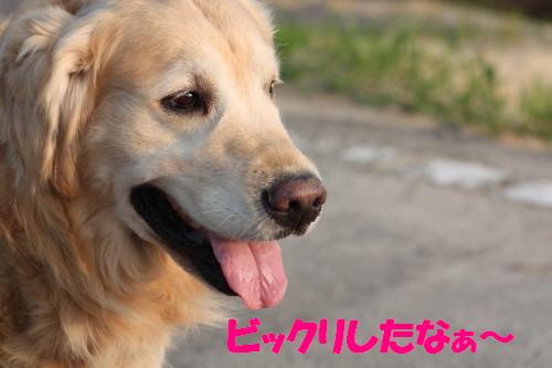 bu-50730001.jpg