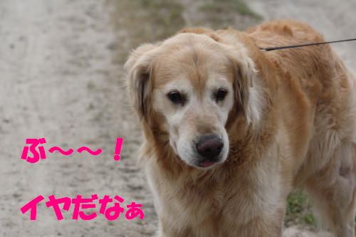 bu-50770001a.jpg