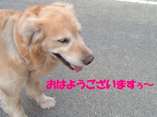 bu-50830001.jpg