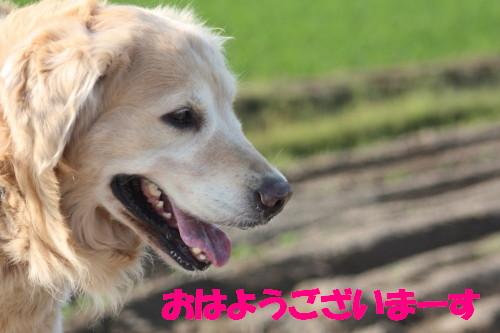 bu-50880001.jpg