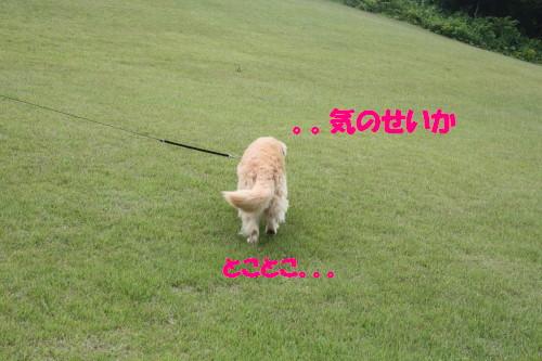 bu-51180001.jpg