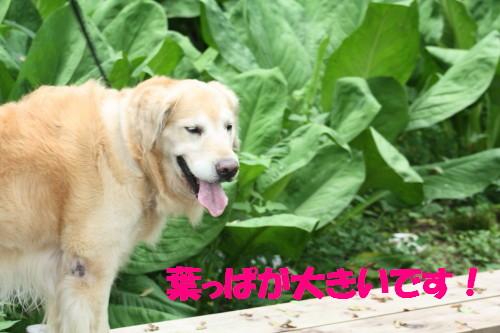 bu-51390001.jpg