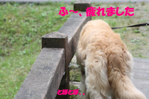 bu-51440001.jpg