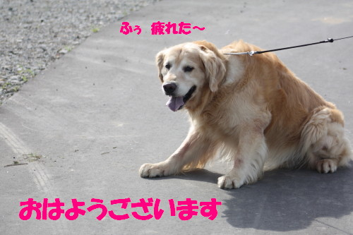 bu-51460001.jpg